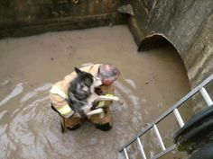 Firefighter risks his life to save a dog during hurricane Sandy!