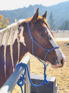 Pretty Paint horse