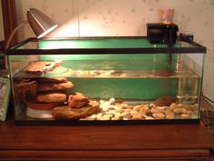 turtle tank | Here is a picture of Wendy's Turtle Tank. You can seethe new baby ...