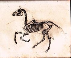 horse skeleton by Lastaquen