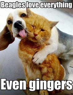 Gatos y perros. Cats and dogs. Baby Animals, Funny Animals, Cute Animals, Funny Pets, Funniest Animals, Funny Kittens, Animals Kissing, Animal Memes, Pretty Animals