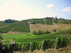 Langhe vineyards - Holiday apartments with jacuzzi in the garden - in Merana on the border Piemonte / Liguria (Italy): www.verdita.com