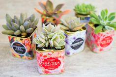 Tea tin succulents. Check them out!
