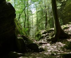 """9 incredible hikes under 5 miles"" in Alabama"