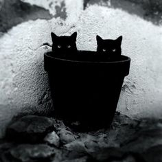 Photographer captures the mysterious life of cats through black and white photos