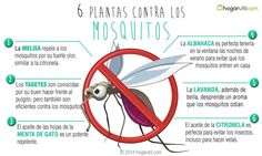 6 plant as contra Los Mosquitos. Eco Garden, Dream Garden, Garden Tools, Repeler Mosquitos, Mosquito Control, Anti Mosquito, Good To Know, Helpful Hints, Exterior