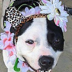 Williston Florida, Animal Welfare, Rescue Dogs, Beautiful Creatures, Pet Adoption, Safari, Pitbulls, Dog Cat, Angels
