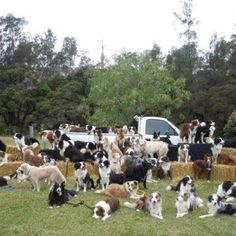Border Collie Heaven!