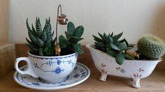 Nice plants in the mini bathtub (Facebook)