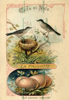 A scan of a French postcard from FrenchKissed on Etsy.