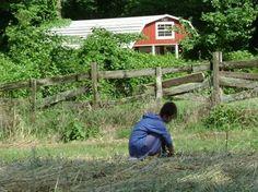 Windermere Farms & Apiaries - Certified Organic Farming csa memphis