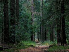Bosgebied 'De Dellen' bij de Nachtegaal