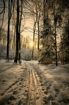 Find images and videos about winter, snow and beautiful nature winter on We Heart It - the app to get lost in what you love. Winter Magic, Winter Snow, Winter Time, Winter Christmas, Snowy Woods, Snowy Day, Winter Scenery, Winter Beauty, Winter Pictures