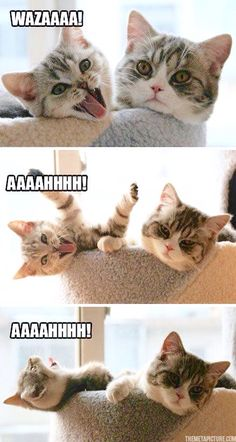 This is my favorite cat picture, I laugh every time I see it! I love silly kittens!