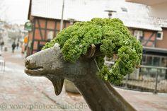 In Gifhorner Stadt steht ein Ziegendenkmal, weil in Gifhorn früher Ziegenzucht sehr verbreitet war. Da nun auch in der Stadt der Markt stattfindet, hat wohl ein Salatthändler seine Reste der Ziege als Kopfbedeckung für die kalte Wintertage gegeben-