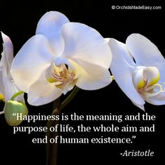 #quote #orchids #Aristotle #