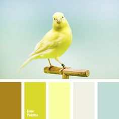 canary color, canary yellow color, color for home, dark turquoise color, lemon color, pale blue color, pale turquoise color, saffron color