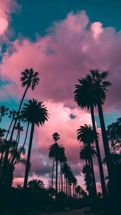 Great 9 Purple Palm Tree Iphone Wallpaper For Your Android or Iphone Wallpapers Palm Tree Iphone Wallpaper, Iphone Wallpaper Vsco, Sunset Wallpaper, Pastel Wallpaper, Trendy Wallpaper, Aesthetic Iphone Wallpaper, Aesthetic Wallpapers, Cute Wallpapers, Wallpaper Backgrounds