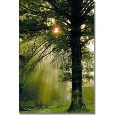 Trademark Art Magical Tree Canvas Wall Art by Kathie McCurdy, Size: 16 x 24, Multicolor