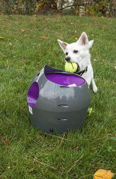 Tired of playing fetch but your dog never is? The PetSafe Automatic Ball Launcher is an automatic fetching machine that can be used by dog and owner or just the dog. Safe, fun and totally versatile! Read More. Tennis Ball Launcher, Dog Ball Launcher, Automatic Ball Launcher, Ball Thrower, Pet Camera, Best Dog Toys, Dog Runs, Fleas, Tired