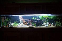 night view- 100 gallon  african cichlid tank