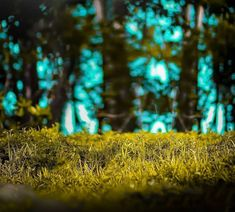Blur Image Background, Background Wallpaper For Photoshop, Desktop Background Pictures, Black Background Photography, Photo Background Editor, Photo Background Images Hd, Editing Background, Picsart Background, Car Backgrounds