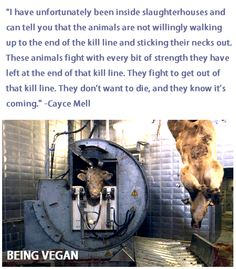 Please think about what it is your supporting! I know you wouldn't support it if you could just take the time to think about it and understand. Please go vegan.