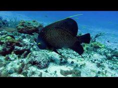 Riviera Maya Mexico Scuba diving photos
