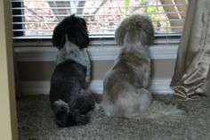 My guard dogs
