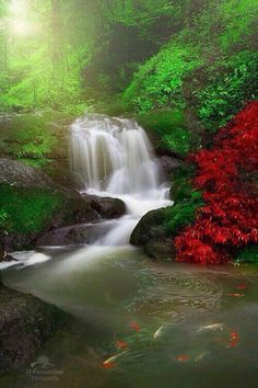 Water flows swiftly every hurdle and purifies everything   Stunning pic