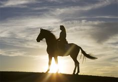 Google Image Result for http://www.theclassicalhorse.com/TCH_Horse_Rider_Sunset_.jpg