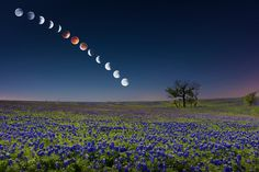 April How about the lunar eclipse over an amazing field of bluebonnets in Ennis, Texas? Mike Mezeul II stayed out until 6 this morning to photograph the different phases of the eclipse and composited them to create this image. Time Lapse Photography, Art Photography, Photography Tutorials, Texas Photography, Amazing Photography, Night Photography, Landscape Photography, All Nature, Science Nature