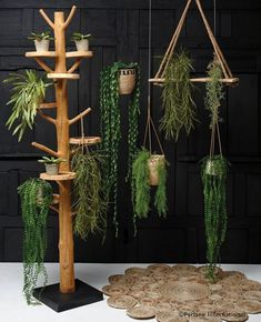 These wooden shelves have a stylish, rustic finish and hang from natural rope. They look fantastic in kitchens and bathrooms, housing plants or herbs.Size: Shelf Height x Material: Wood Diy Hanging Shelves, Plant Shelves, Wooden Shelves, Hanging Baskets, Hanging Plants, Indoor Plants, Rideaux Boho, Decoration Plante, Purple Home