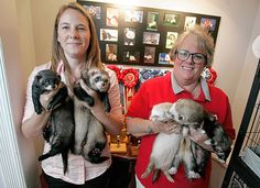 The Ferret Buckeye Bash, the annual show put on by Heart of Ohio Ferret Association and Rescue Inc., raises funds to care for the mischievous pets left homeless for one reason or another.