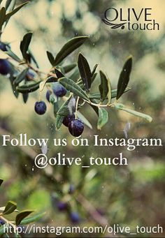 Being invited to the beautiful Casale degli Olive in Umbria was certainly no punishment and it was a great and fun foodie weekend. Bokeh, Terre Nature, Toscana Italia, Under The Tuscan Sun, Ivy Plants, Olive Gardens, Liquid Gold, Olive Tree, Edible Garden