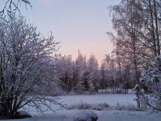 luonto kuvat ja kortit: Joulukuussa