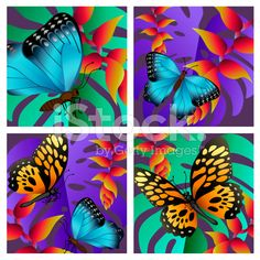 tropical butterflies royalty-free stock vector art