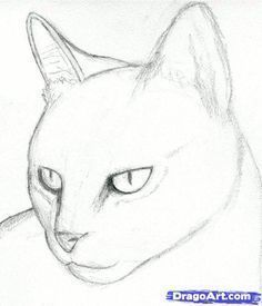 Realistic Drawings how to draw a cat head, draw a realistic cat step 3 Art Drawings Sketches, Easy Drawings, Pencil Drawings, Pencil Art, Easy Animal Drawings, Cat Sketch, Sketch Art, Cat Drawing Tutorial, Easy Cat Drawing