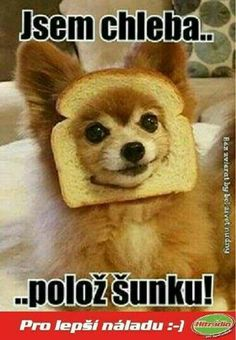 A potom ju zozerem :D Funny Fails, Funny Jokes, Hilarious, Funny Images, Funny Pictures, Funny Numbers, Funny Animals, Cute Animals, English Jokes