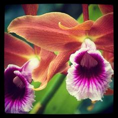 Oldie but goodie, from my #nikond70 #backintheday. #flowers #flower #orchid #nikon #flores #orquidia #pretty #bonita #gmy #picoftheday #photooftheday #photography #nature - @opusrouge- #webstagram