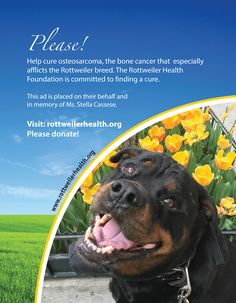 PLEASE! Help cure osteosarcoma, the bone cancer that especially afflicts the Rottweiler breed. The Rottweiler Health Foundation is committed to finding a cure.  This ad is placed on their behalf and in memor of Ms. Stella Cassese.  Visit: www.rottweilerhealth.org  Please donate!