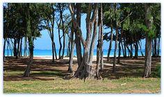 Waimanalo Rec Area Beach Ironwood Trees