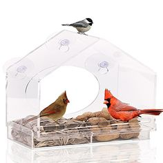 SUMMER SALE!! Large Premium Window Bird Feeder. GUARANTEED FOR LIFE. Includes Easy Removable Tray, 4 Heavy Duty Suction Cups, Drain Holes & Stylish Packaging. ** Click on the sponsored Amazon image for additional details.