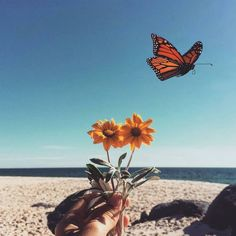 Perhaps the butterfly is proof that you can go through a great deal of darkness yet become something beautiful. Orange Aesthetic, Beach Aesthetic, Nature Aesthetic, Flower Aesthetic, Aesthetic Collage, Summer Aesthetic, Aesthetic Anime, Butterfly Background, Butterfly Wallpaper