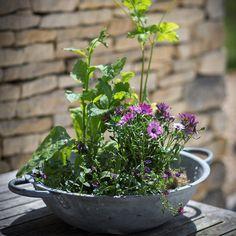 Galvanised Table Top Bibury Planter / Ice Bucket from The Farthing: https://thefarthing.co.uk/products/galvanised-table-top-bibury-planter-ice-bucket