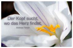 Mein Papa sagt...  Der Kopf sucht, wo das Herz findet. Andreas Tenzer   #Zitate #deutsch #quotes      Weisheiten und Zitate TÄGLICH NEU auf www.MeinPapasagt.de