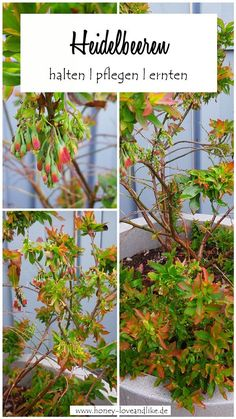 Herbs, Cluster, Plants, Yard Ideas, Inspiration, German, Pot Plants, Craft