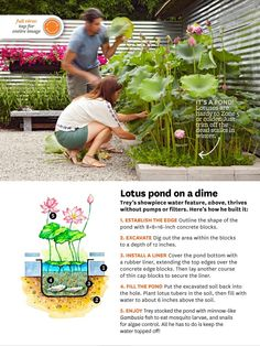 Lotus pond how to