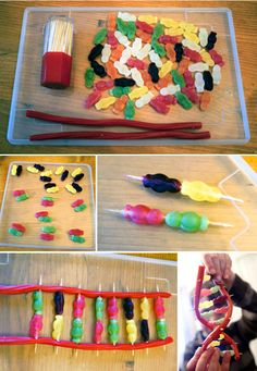 How to Make DNA with Jelly Babies and Licorice Science Party, Preschool Science, Science Classroom, Science For Kids, Nifty Science, Mad Science, Biology Projects, Science Fair Projects, School Projects