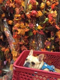 French Bulldog Shopping Plastic Laundry Basket, French Bulldog, Cute, Shopping, French Bulldog Shedding, Kawaii, Bulldog Frances, Bulldog French, French Bulldogs
